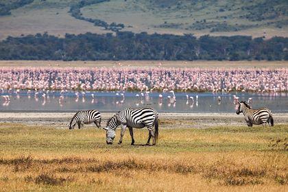 Faune dans l'aire de conservation du Ngorongoro - Tanzanie - ksumano/stock.adobe.com