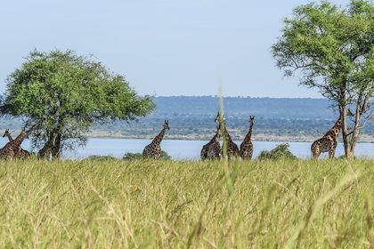 Journée safari - Murchison Falls - Ouganda - Venture Uganda