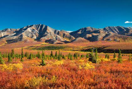 Parc national et réserve de Denali - Alaska - Etats-Unis - EyeCatchLight/fotolia.com