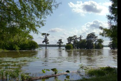 Lake Martin Reserve - Louisiane - Etats-Unis - Julie Bodnar