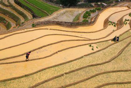 Rizières en terrasses - province de Lao Cai - région de Sapa - Vietnam - Easia Travel