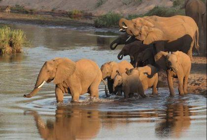 Parc Kruger - Afrique du Sud - S. A. C.
