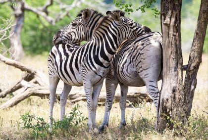 Parc Kruger - Afrique du Sud - Palenque / Fotolia.com