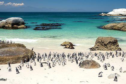 Manchots du Cap à Boulders Beach - Simon's Town - Afrique du Sud - schame87 - stock.adobe.com