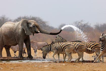 Eléphants et zèbres autour d'un point d'eau - Afrique du sud - JohanSwanepoel/stock adobe.com