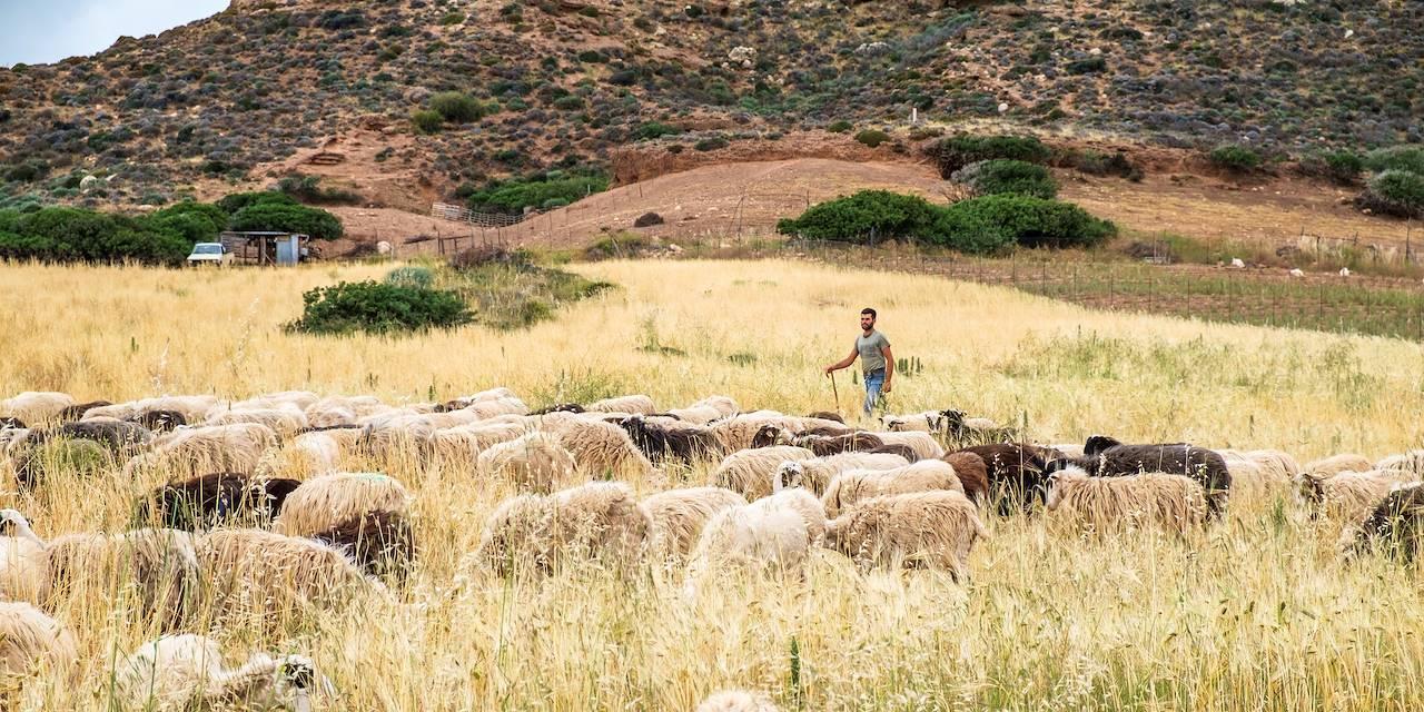 Berger et son troupeau - Crète - Grèce
