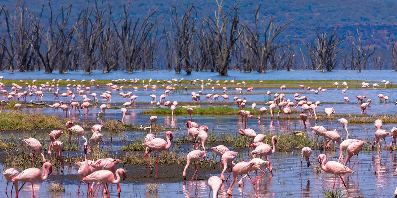 Flamants roses sur le lac Nakuru - Vallée du grand rift - Kenya