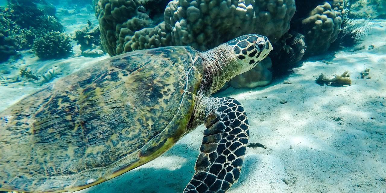 Tortue marine - Nosy Sakatia - Madagascar