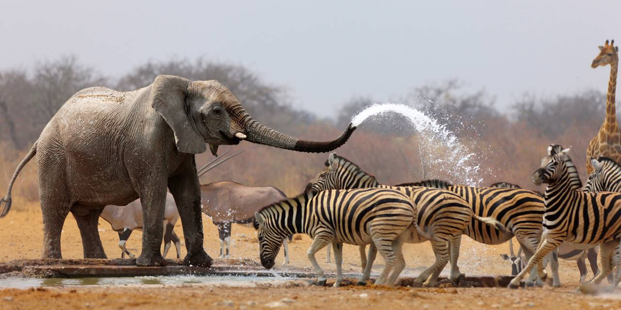Eléphants et zèbres autour d'un point d'eau - Afrique du sud