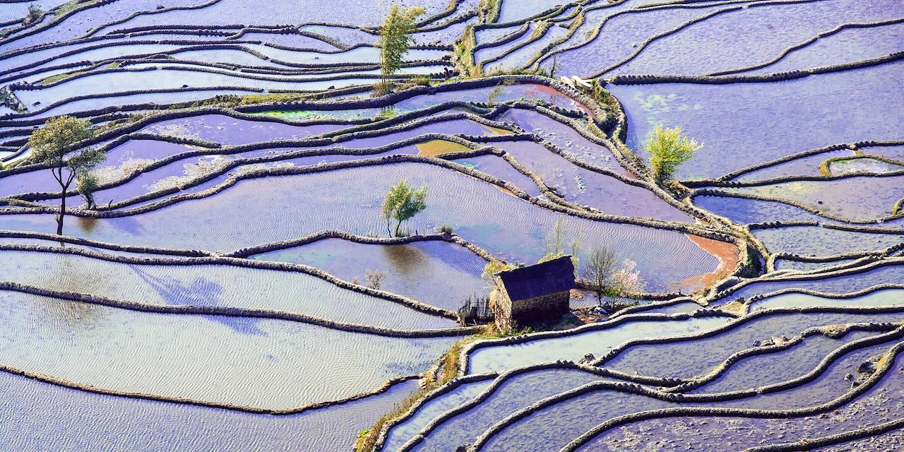 Rizières en terrasse des Hani de Honghe - Province du Yunnan - Chine