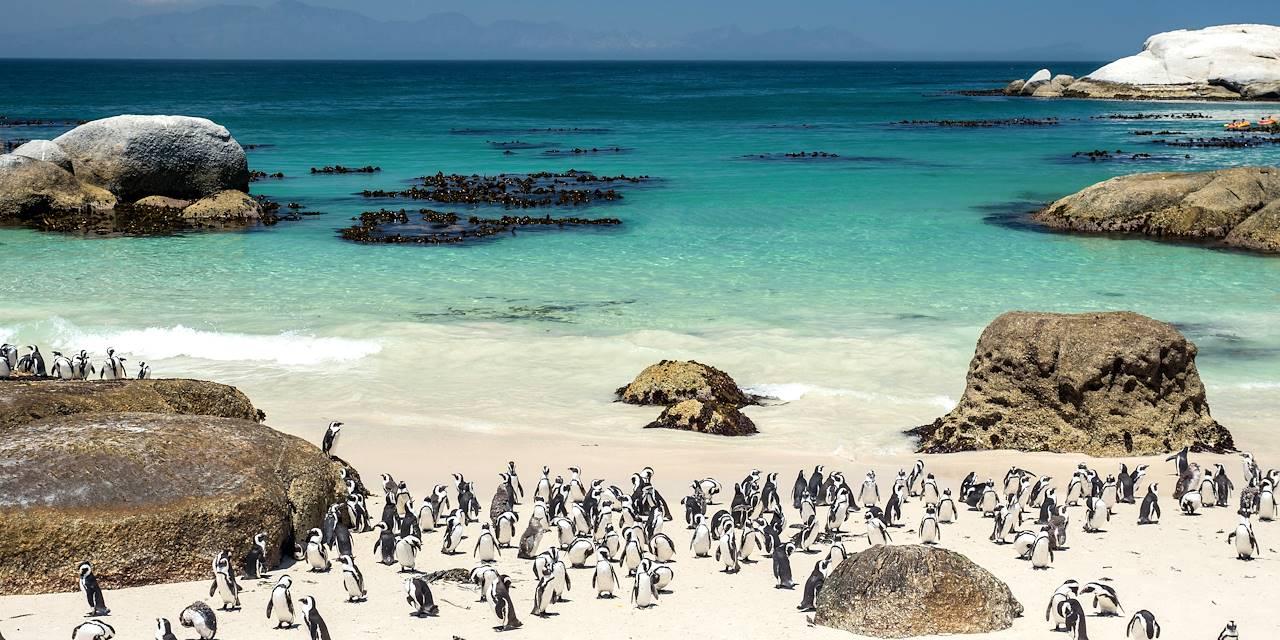 Manchots du Cap à Boulders Beach - Simon's Town - Afrique du Sud