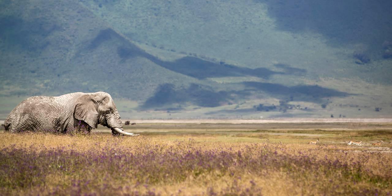 Safari au Cratère de Ngorongoro - Cratère de Ngorongoro - Nord - Tanzanie