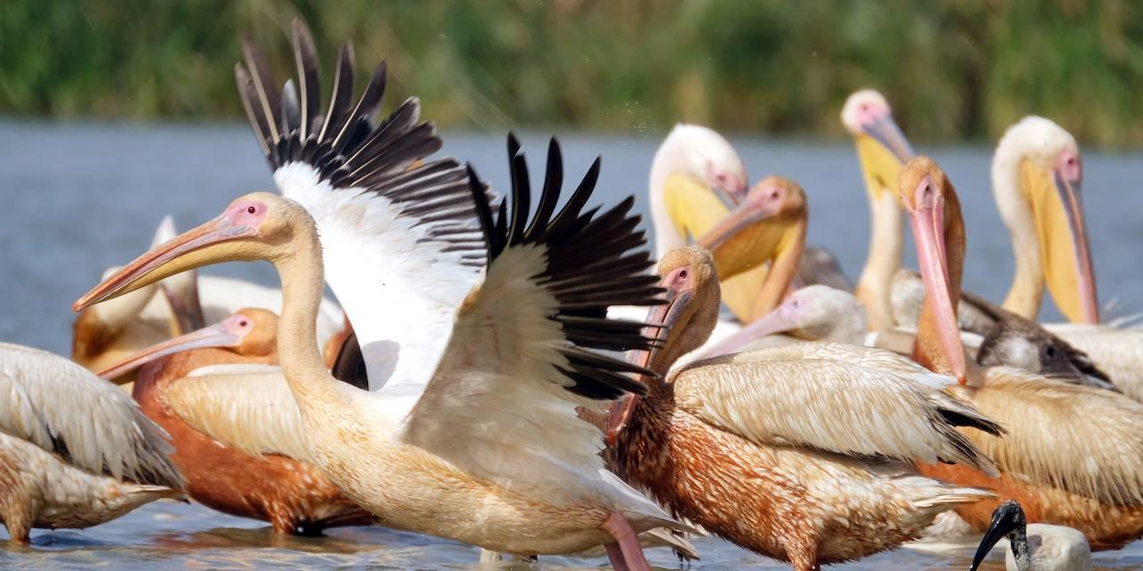 Parc national des oiseaux du Djoudj - Région de Saint-Louis - Sénégal