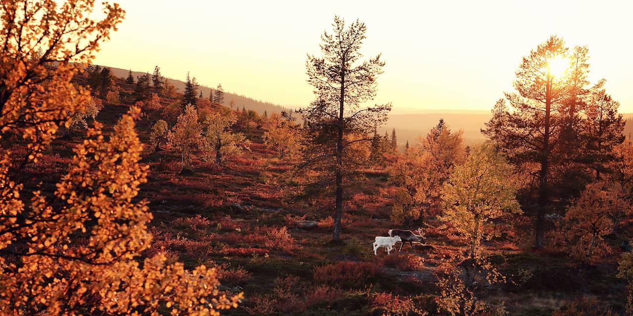 Parc national de Pallas-Yllästunturi - Laponie - Finlande