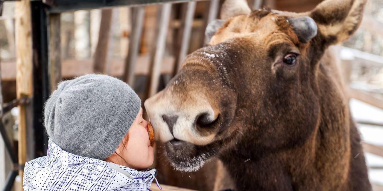 Enfant embrassant un orignal en Finlande