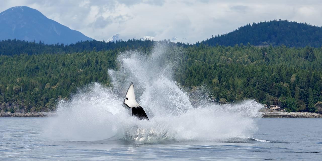 Saut d'orque - Canada