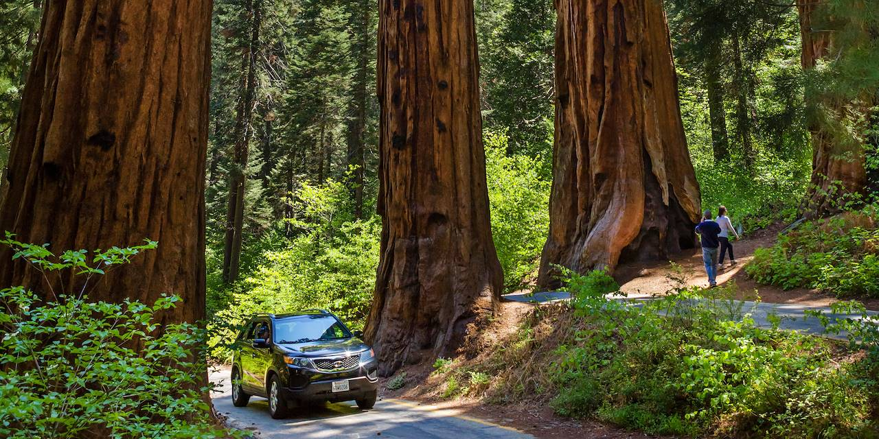 Parc national de Sequoia - Californie - Etats-Unis