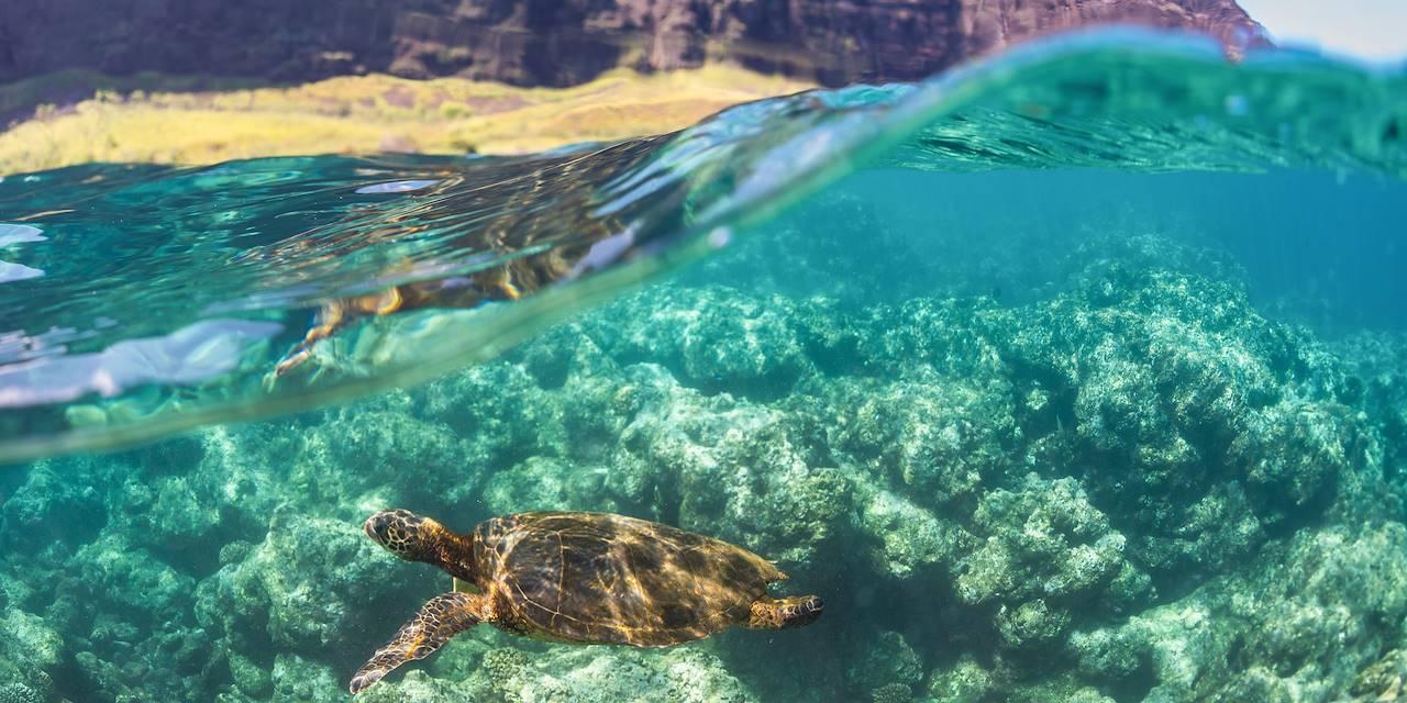 Tortue sur la Napali Coast - Kauai - Hawai