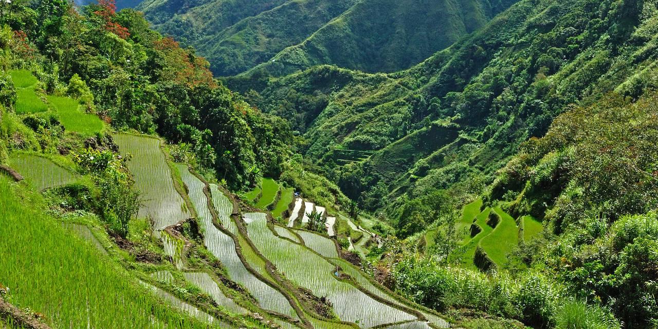 Les rizières en terrasse de Banaue - Province d'Ifugao - Philippines
