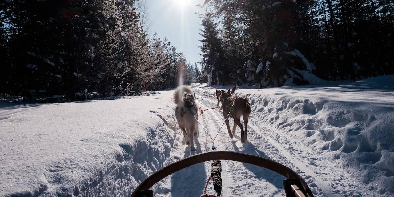 Safari en chiens de traîneaux - Finlande
