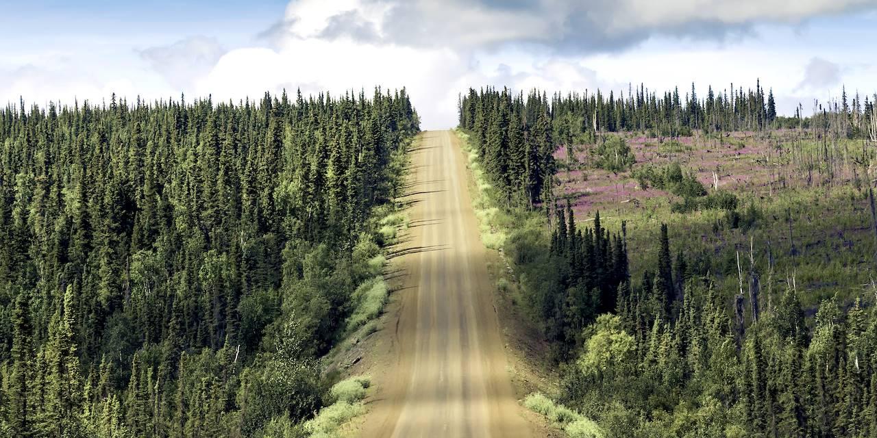 Environs de Fairbanks - Alaska - Etats-Unis