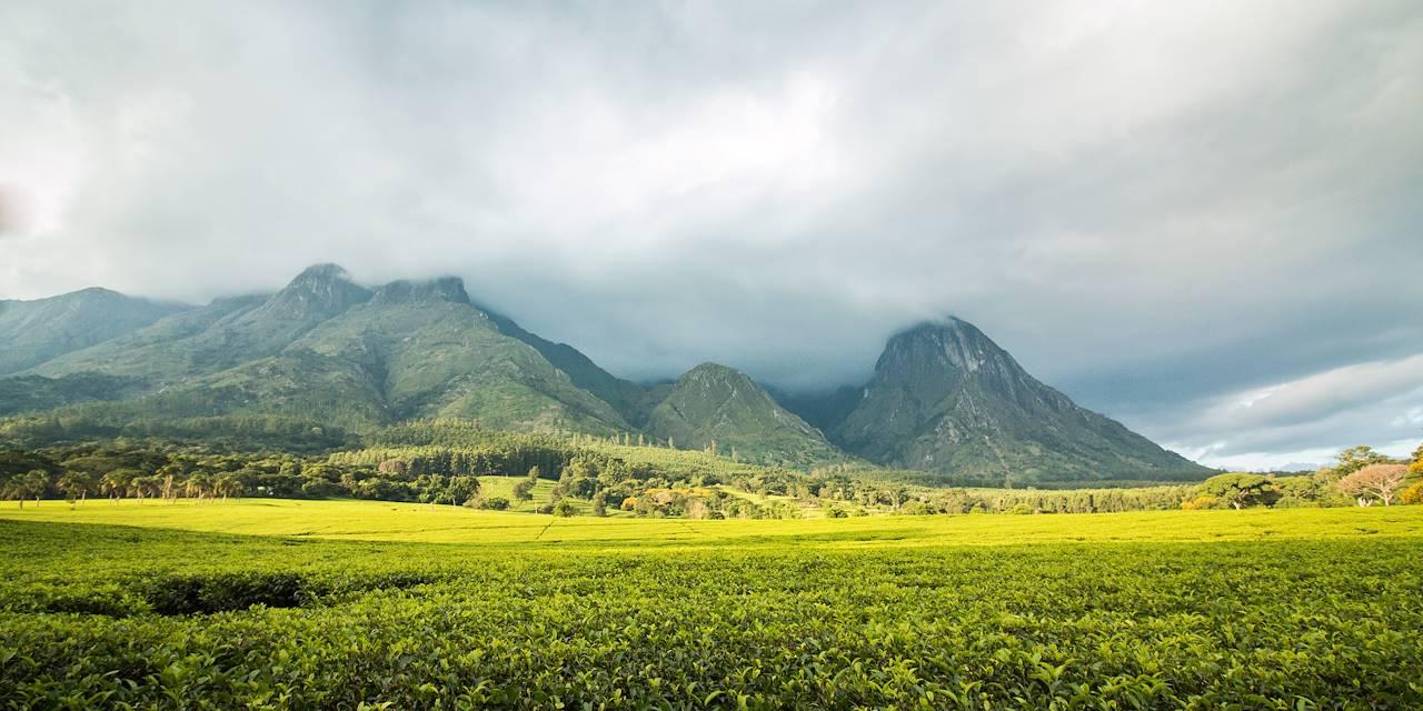 Massif Mulanje - Région Sud - Malawi