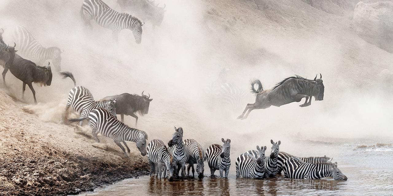 Migration des gnous et des zèbres - Parc du Serengeti - Tanzanie
