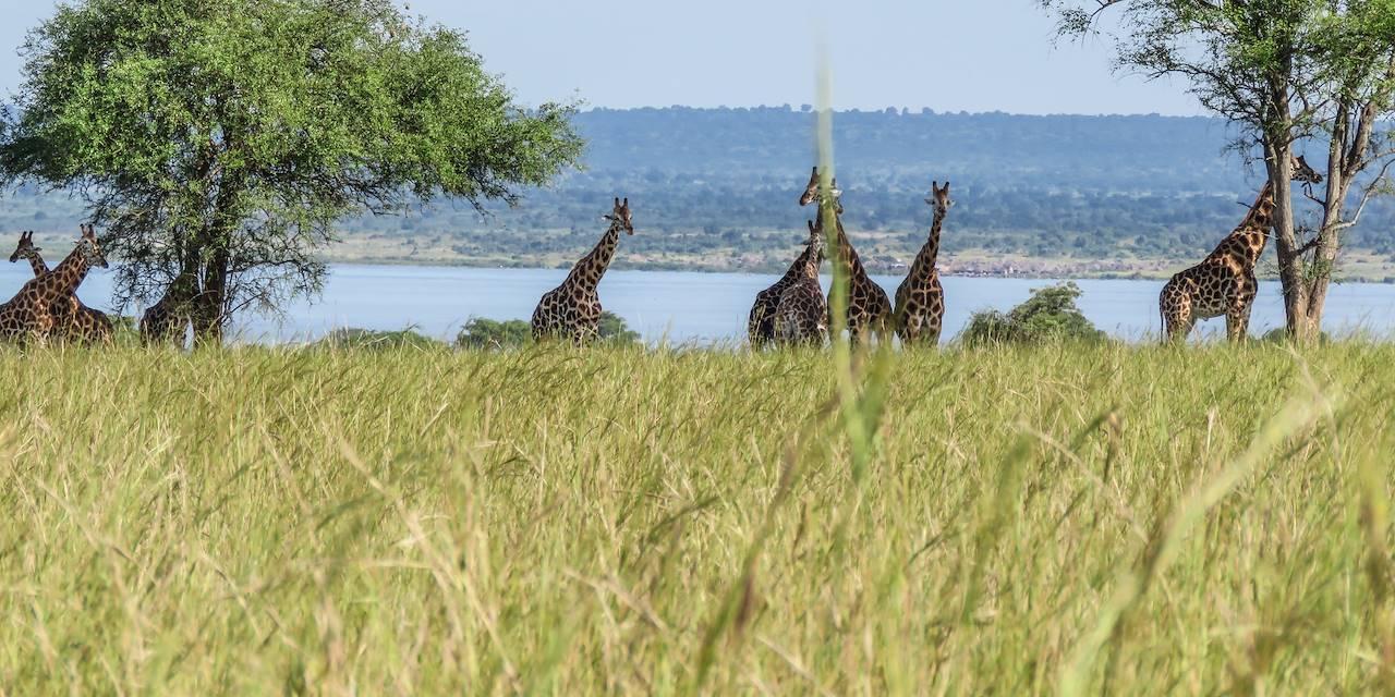 Journée safari - Murchison Falls - Ouganda