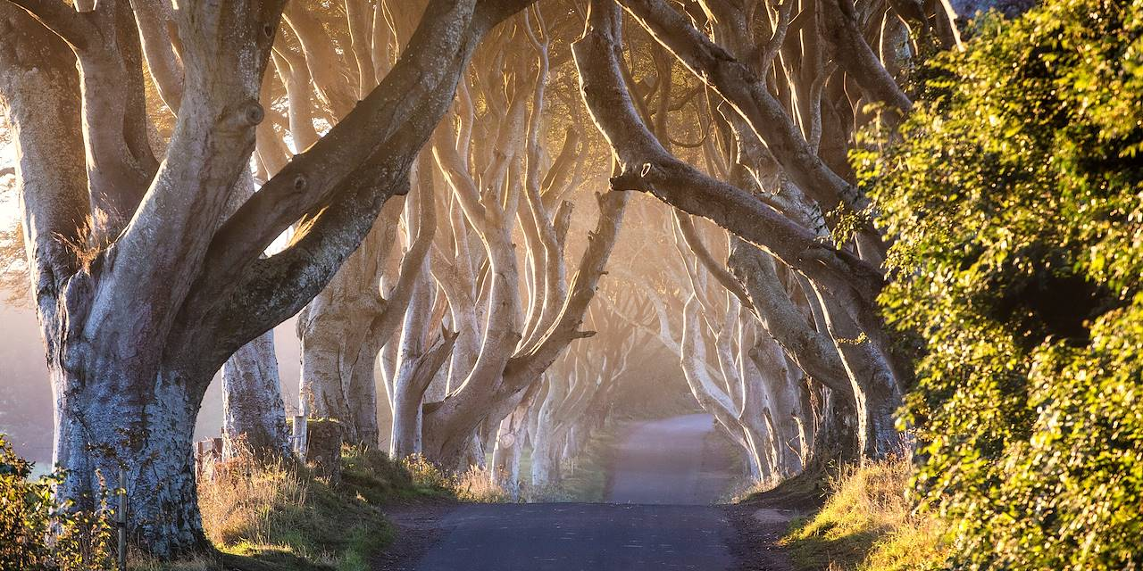 The Dark Hedges - Comté d'Antrim - Irlande du Nord