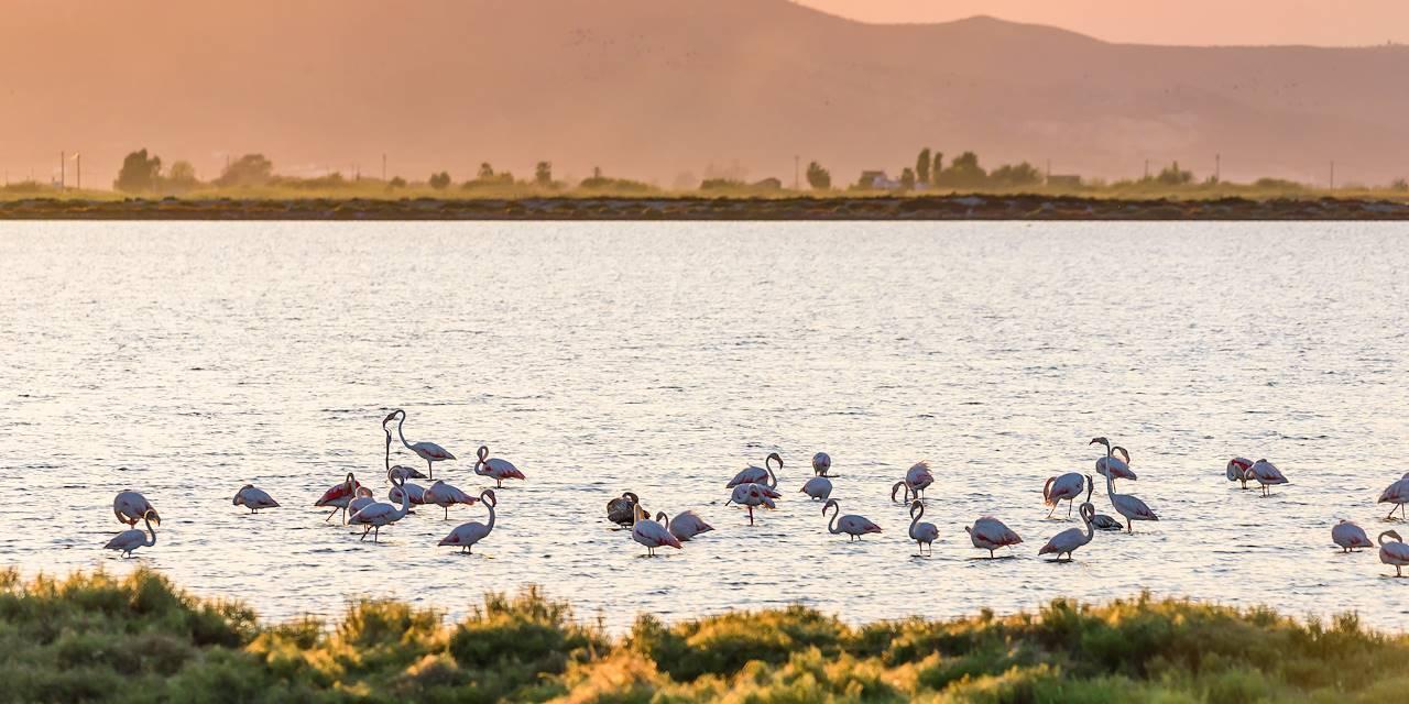 Oiseaux dans le delta de l'Èbre - Catalogne - Espagne
