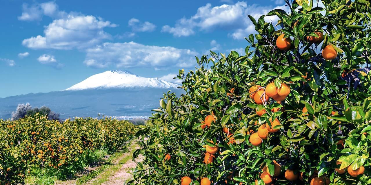 Orangers devant l'Etna - Sicile - Italie