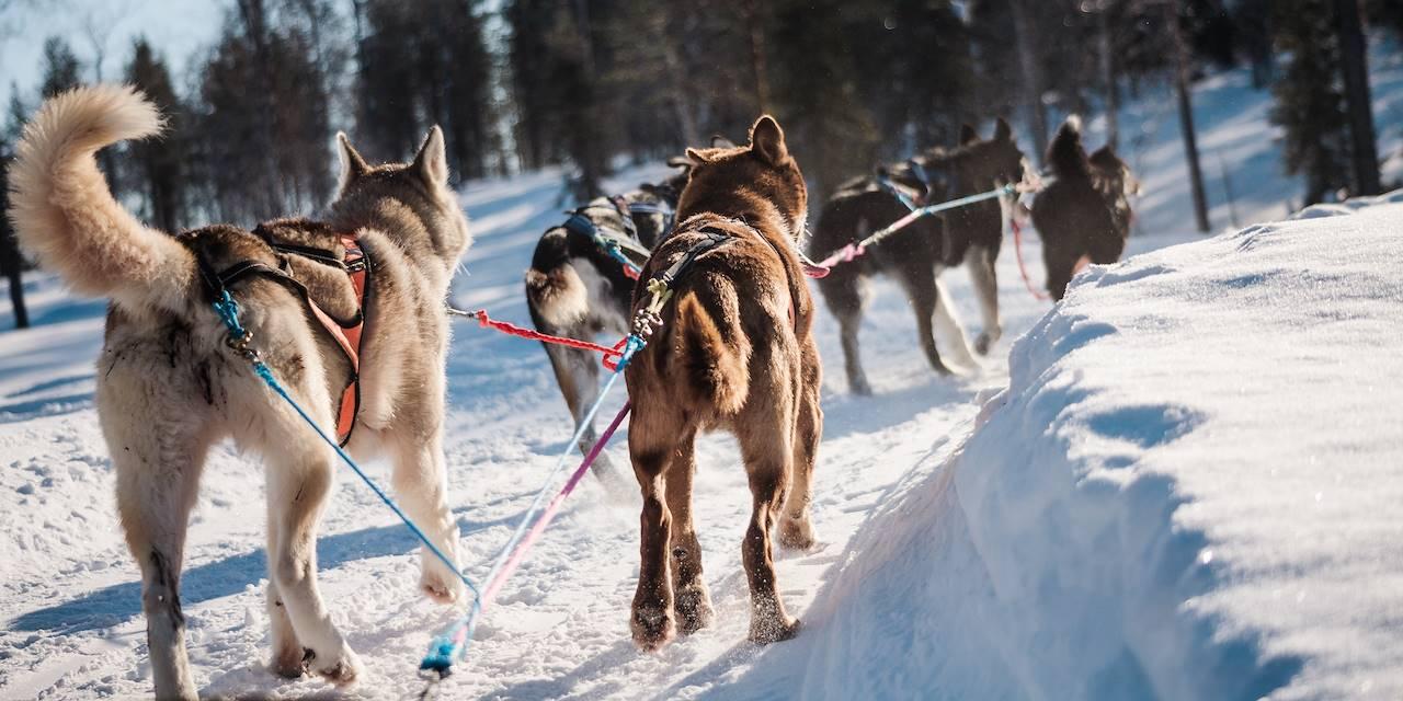 Traîneau à chiens - Laponie - Finlande