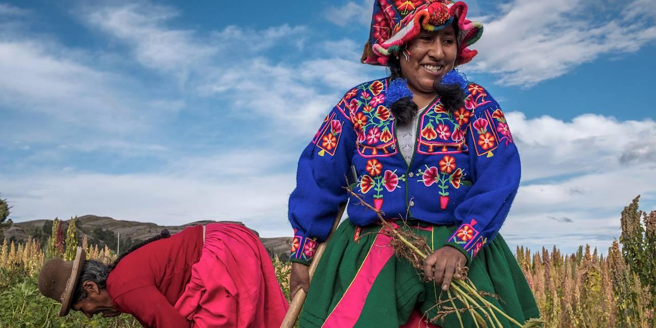 Récolte des pommes de terre - Socca - Pérou