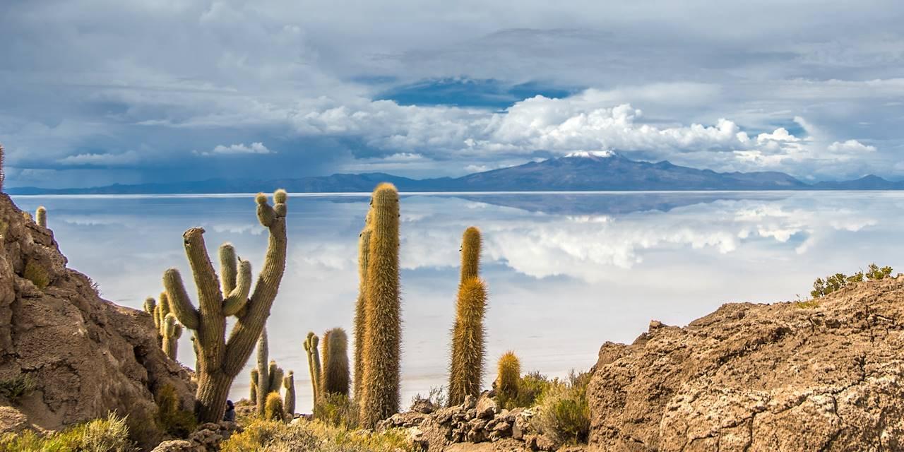 Île Incahuasi - Salar de Uyuni - Bolivie